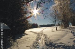Spuern im Schnee
