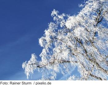 Silvester im Bayerischen Wald